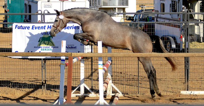 Fast Facts: 2019 USEA Future Event Horse West Coast Championships