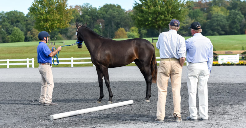 PODCAST: Future Event Horse Judging with Susan Graham White