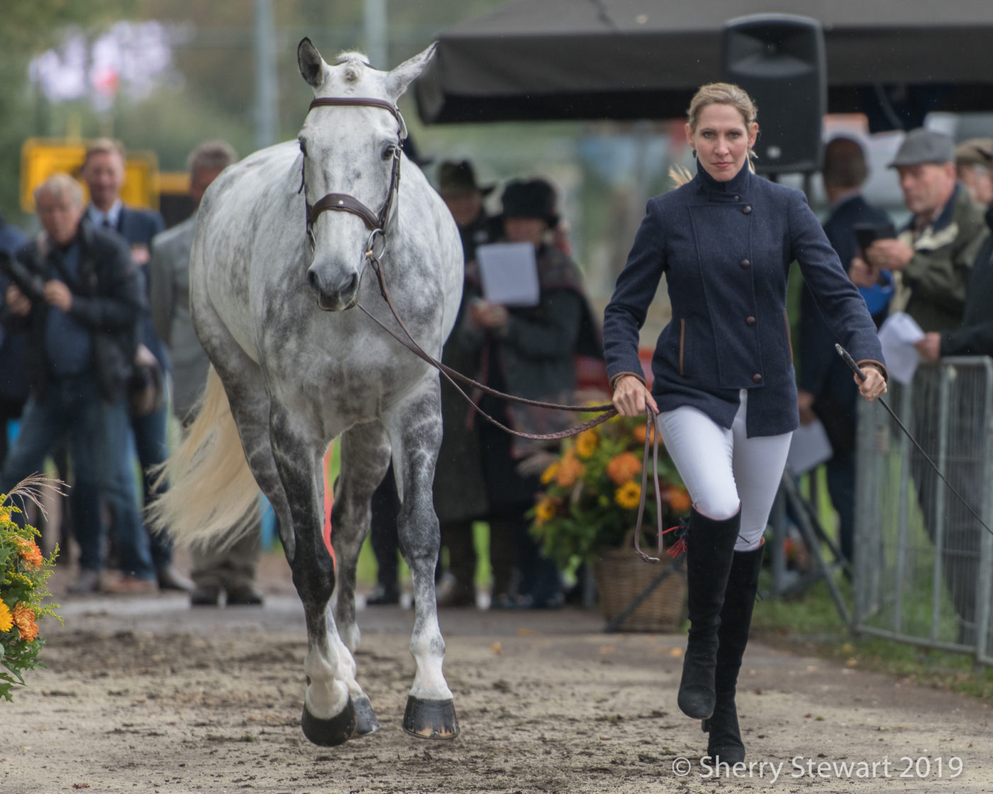 Elisabeth Halliday-Sharp and Cooley Quicksilver. Sherry Stewart Photo.