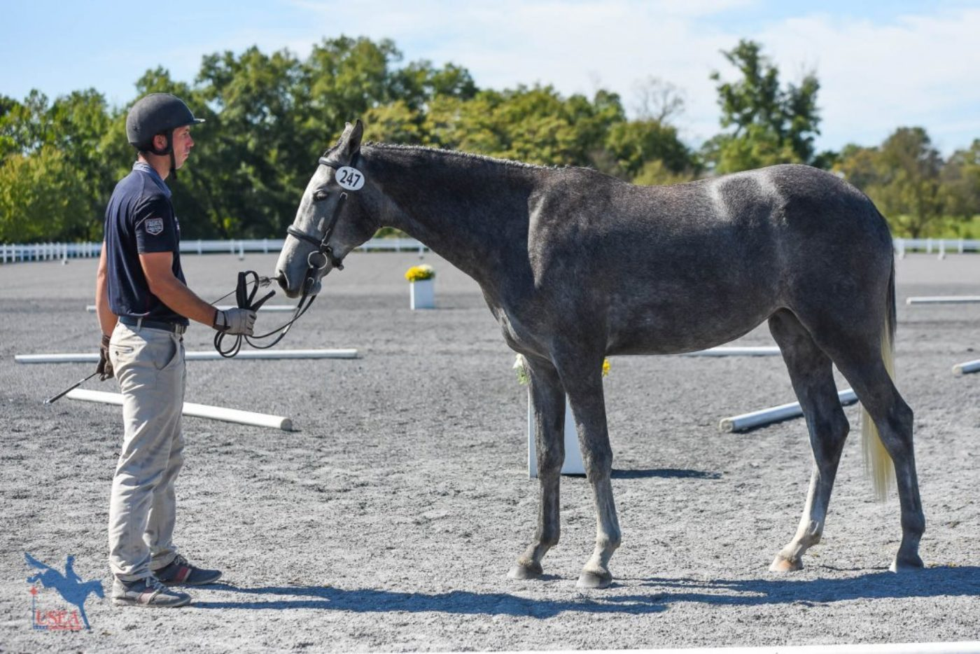 3rd  2-year-old Filly - SF Rama - 79.25