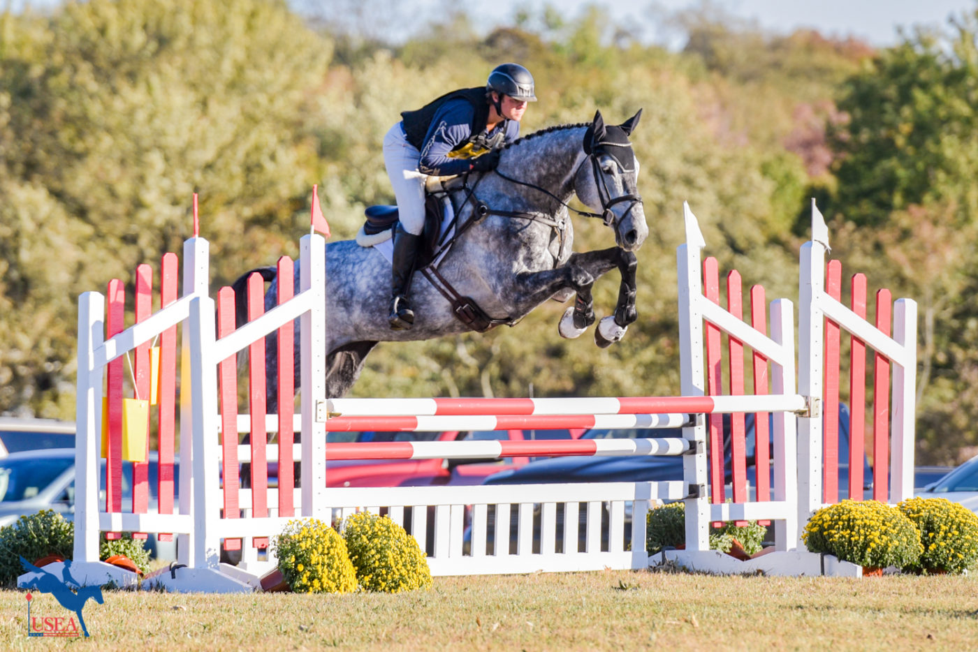 How to Prepare Young Horses for the Show Atmosphere with the O'Neals