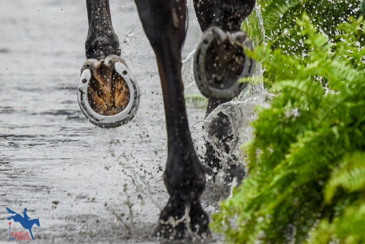 The jog strip on Sunday at WEG was a whole different kind of water hazard. USEA/Leslie Mintz Photo.