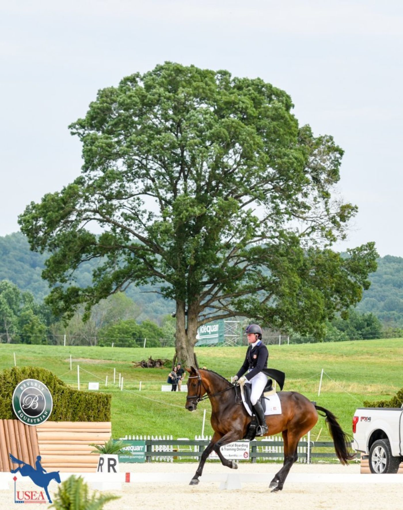 The famous Great Meadow tree makes the perfect backdrop to Lauren Kieffer and Veronica's test. USEA/Leslie Mintz Photo.