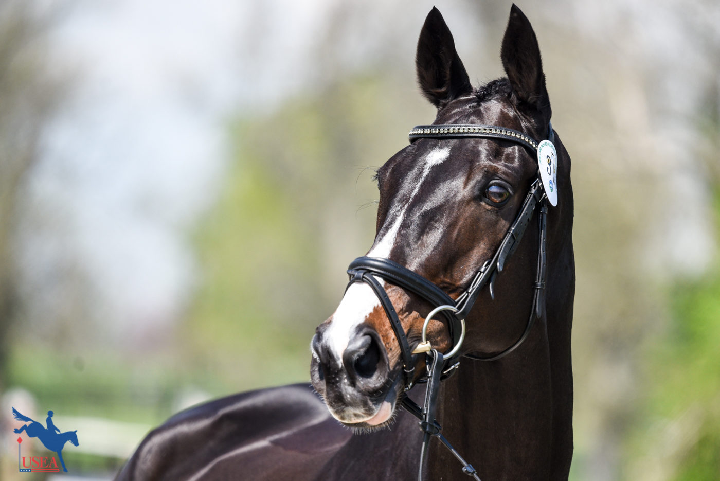 Glenfly's eyes stole our hearts this week. USEA/Leslie Mintz Photo.