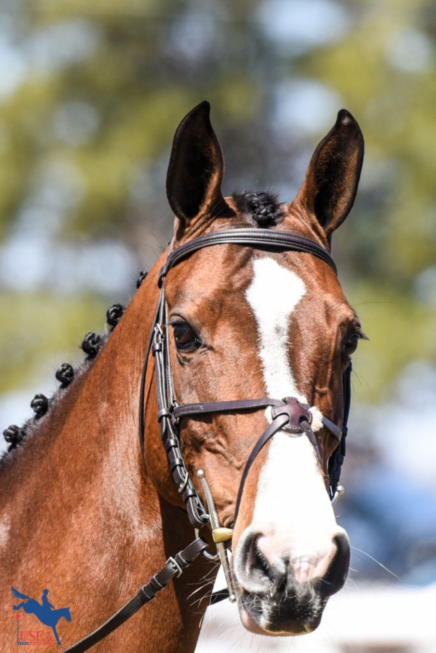 Caeleste is ready for her close up! USEA/Leslie Mintz Photo.