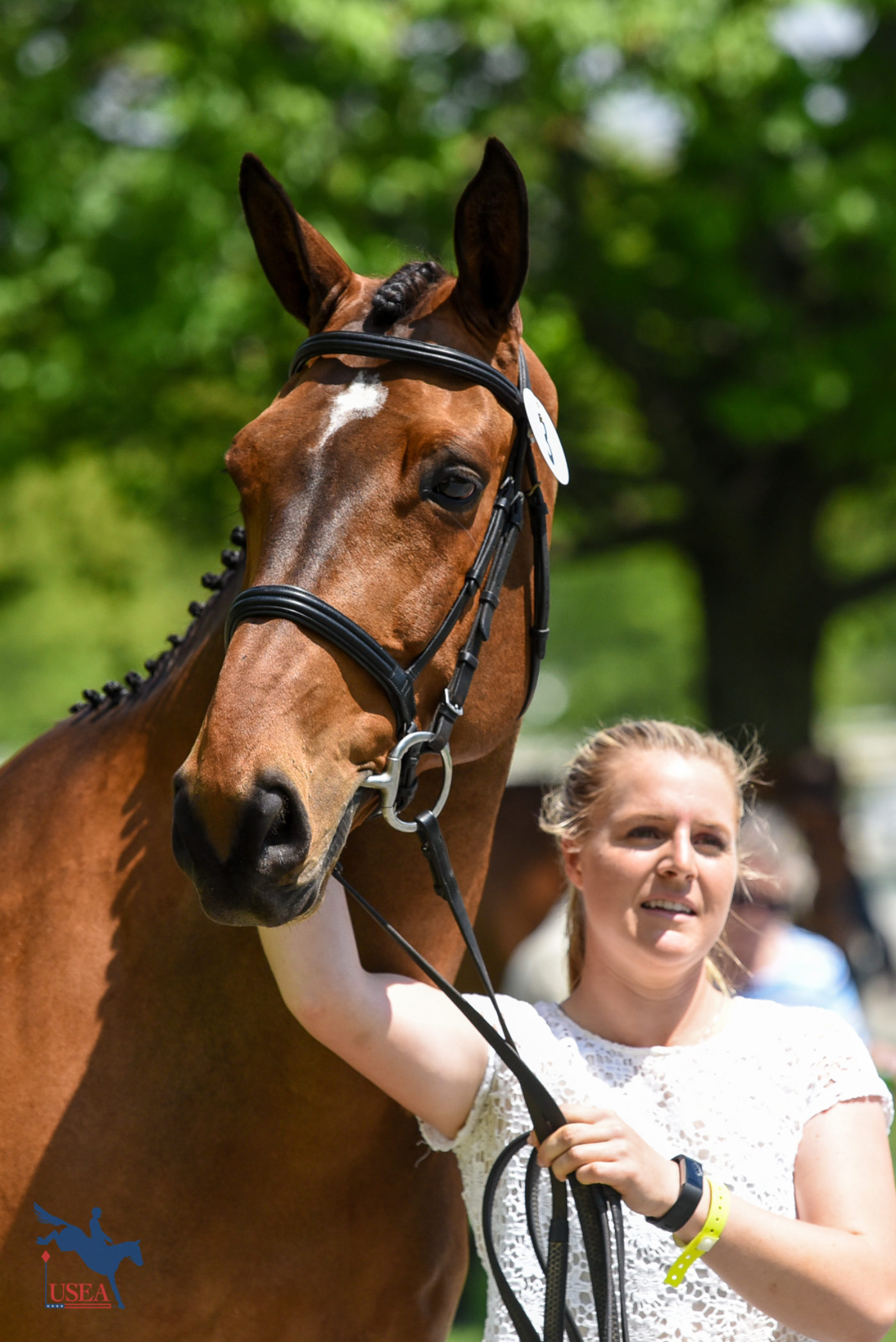 Jill Thomas' OBOS Darko practicing for his close-up. USEA/Jessica Duffy Photo.