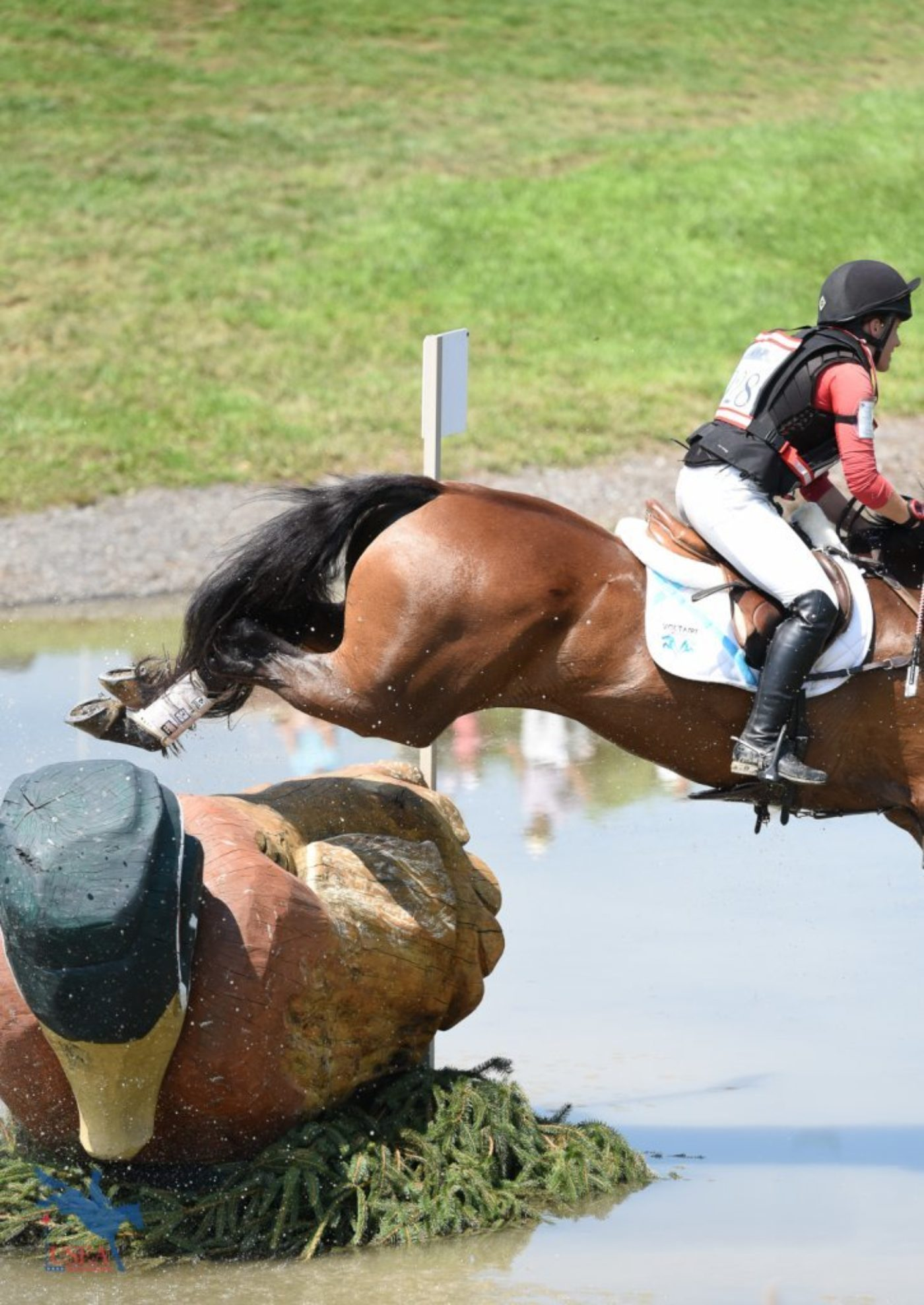 Duck . . . Duck . . . Goose? USEA/Jessica Duffy Photo.