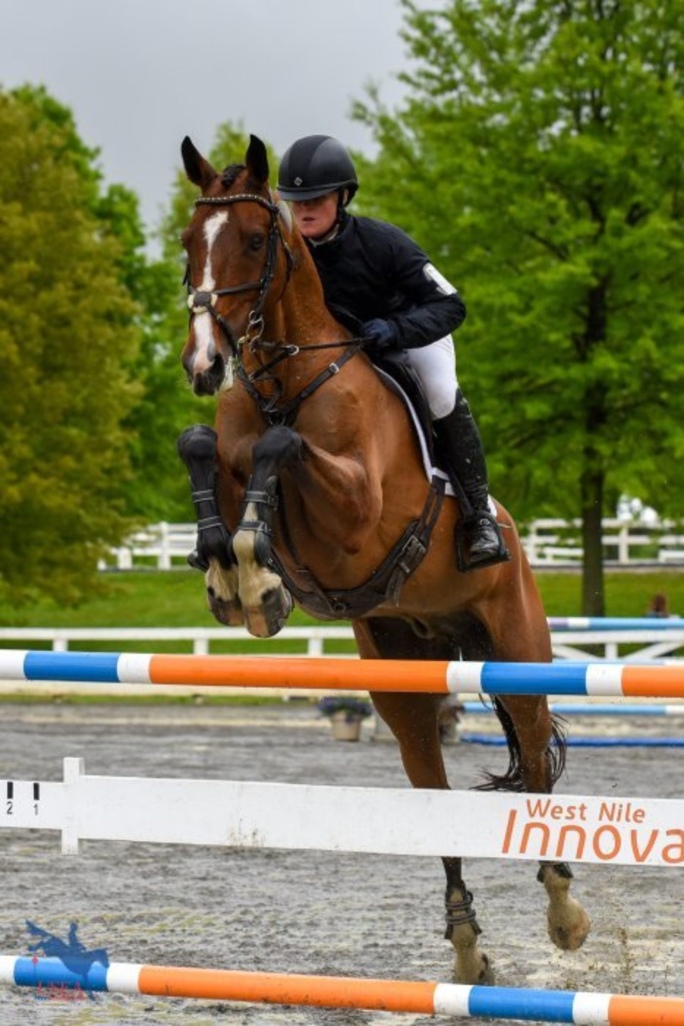 16th - Autumn Schweiss and Oakport Strauss - 82.0