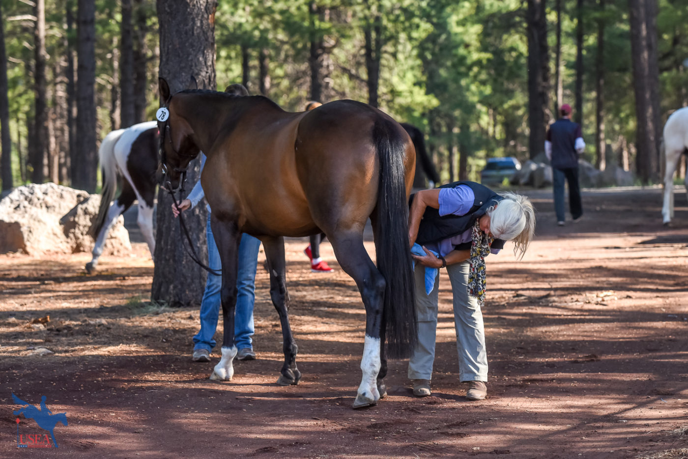 One final touchup for Bon Bon before heading down the jog strip. USEA/Jessica Duffy Photo.
