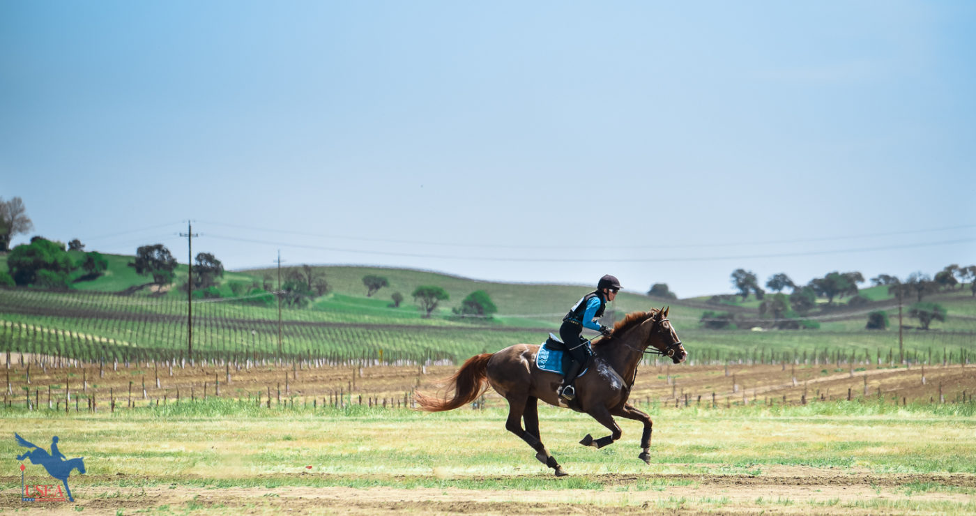 Galloping across a backdrop of vineyards. USEA/Jessica Duffy Photo.