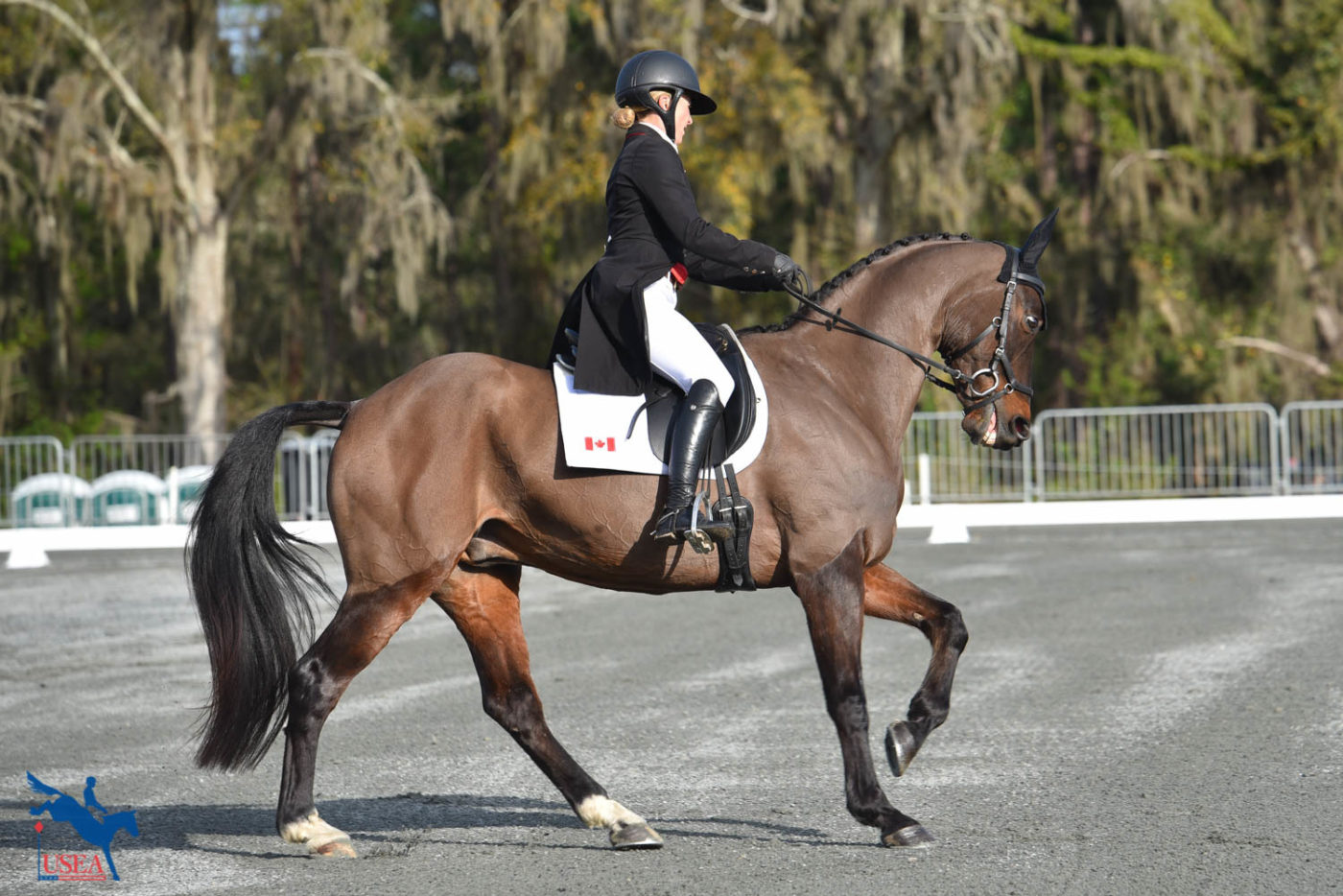 Jessica Phoenix on her first ride in the CCI4*-S, Pavarotti. USEA/Kate Lokey photo.