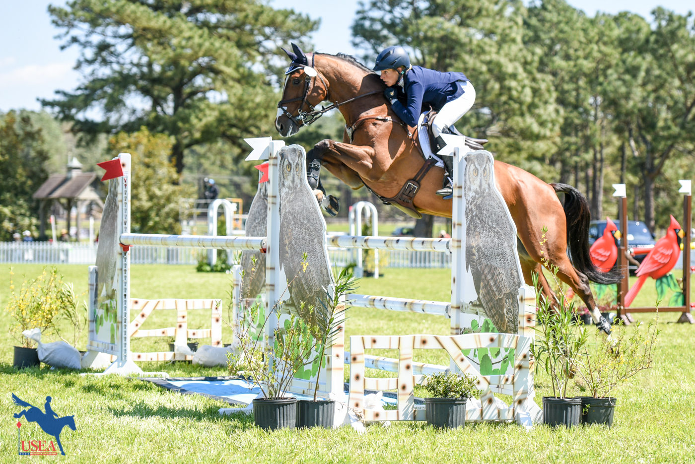4* - 2nd - Liz Halliday-Sharp and Deniro Z
