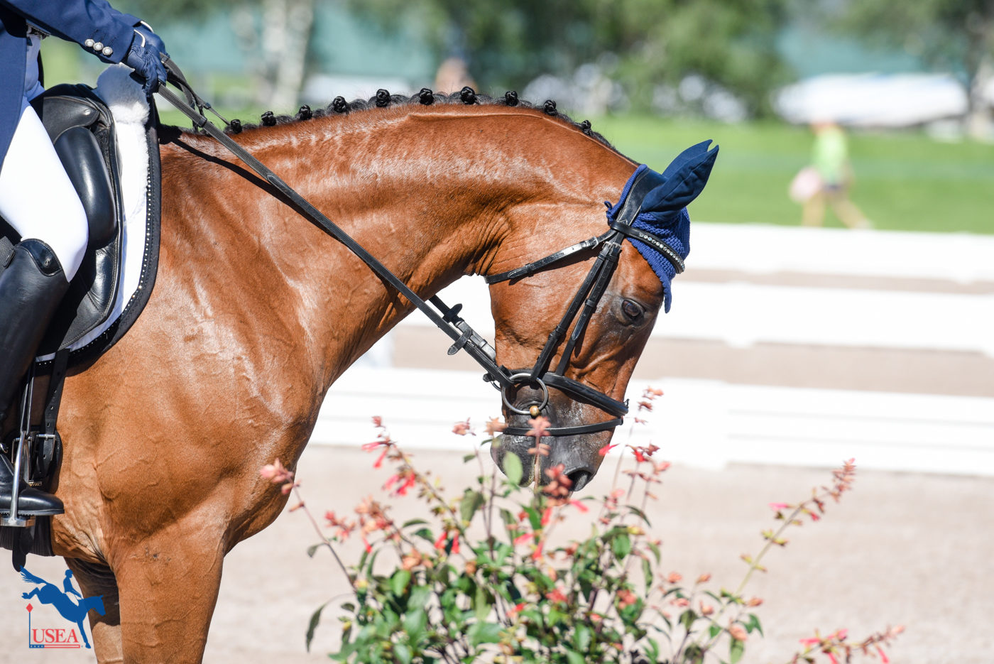 X, Halt, Smell the flowers. USEA/Leslie Mintz Photo.