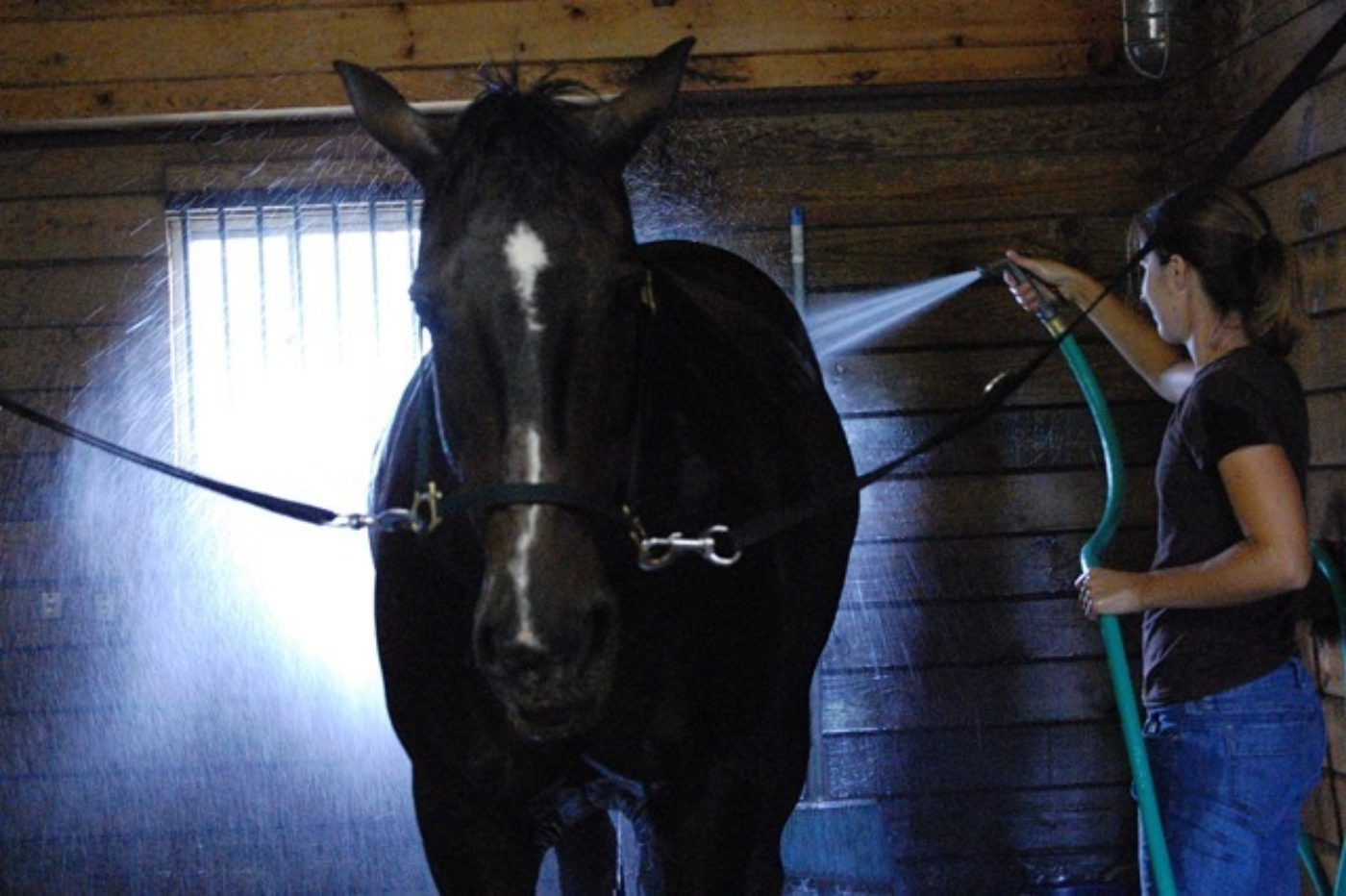 Advice For Horse Safety During Hot Weather